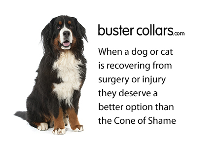 Buster Collars